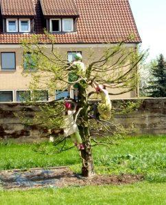 kletterbaum